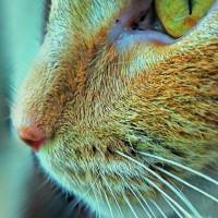 Pisicile stiu cum sa obtina hrana fara munca