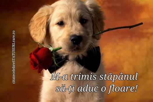Trandafir adus de catel