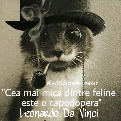 citate despre pisici Citate despre pisici | Colectie de citate, statusuri, proverbe  citate despre pisici